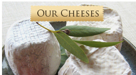 our_cheeses